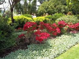 low maintenance landscaping for your office carolina services inc