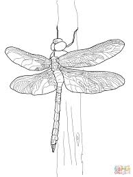 dragonfly coloring pages getcoloringpages com