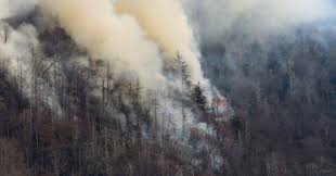 Wildfire Honey by Two Juveniles Charged In Connection With Deadly Tennessee Wildfire