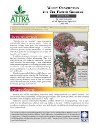 woody ornamentals for cut flower growers