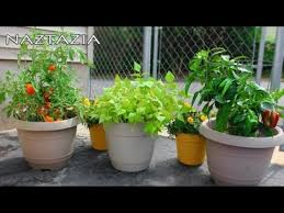 ideas for container vegetable gardening beginners landscaping