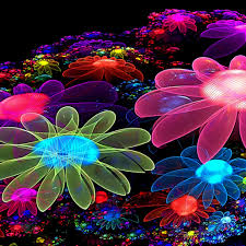 image gallery of cool pictures of flowers rainbow