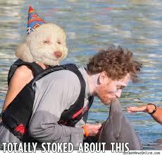 Stoned Dog Meme - stoned dog birthday images