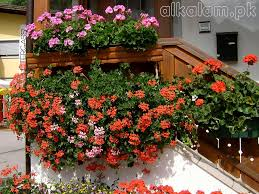 balcony flowers beautiful 2 balcony flowers 1024 capitangeneral
