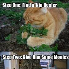 Saturday Night Meme - my cats saturday night by jesskgrounds meme center