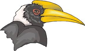 head bird hornbill beak png image pictures picpng