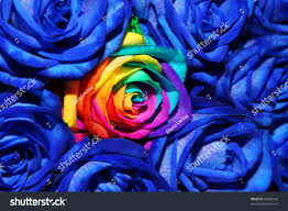 Colored Roses Bouquet Creative Colored Roses Rainbow Rose Stock Photo 63328546