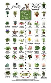 common house plants and your pets u2014 dog blog great dane angels