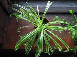 Plants That Don T Need Light 15 Indoor Air Purifying Plants For Your Apartment Or Home 6sqft