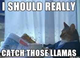 Arizona Memes - the llamas chase in arizona made the best internet memes celebuzz