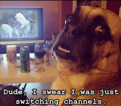 Funny Tv Memes - funny dog watching tv