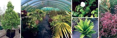 native plant nursery sydney garden consultancy construction landscaping u0026 horticulturist