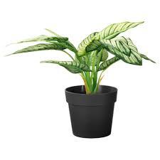 artificial plants u0026 flowers plants plant pots u0026 stands ikea
