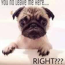 Puppy Face Meme - funny pug dog meme pun lol pinteres