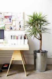 Best Office Desk Plants 10 Best Indoor Plants Images On Pinterest Home Indoor Plants