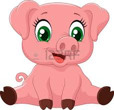 pig tails stock photos royalty free pig tails images pictures