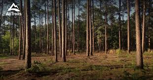 South Carolina forest images Best trails in harbison state forest south carolina 239 photos jpg