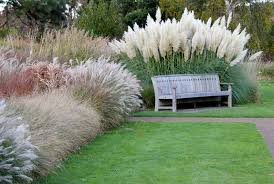ornamental grasses garden weasel