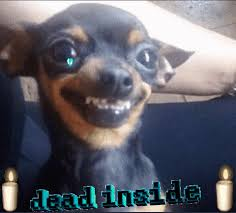 Sad Dog Meme - sad dog meme gif dog best of the funny meme