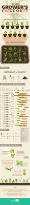 herb growing chart how to grow an herb garden herb growing chart