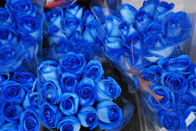 blue roses for sale blue roses blue roses for sale at the store on aus flickr