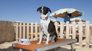 bagno per cani spiagge con cani ammessi in emilia romagna viaggi con il