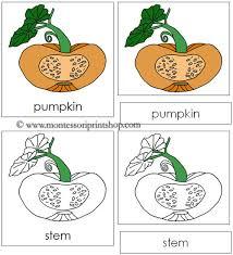 7 best images of printable pumpkin label the parts pumpkin parts