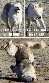 3 Wolf Moon Meme - 10 of the funniest memes featuring moon moon the awkward wolf