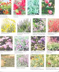 native plant list drought tolerant plant list pt2 note the 2 different types of