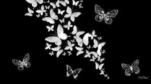 butterfly wallpaper black and white black white butterfly