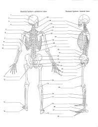 Human Anatomy Skeleton Diagram Skeleton Diagram Blank Anatomy Organ