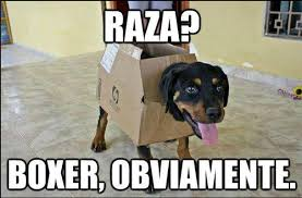 Memes Funny En Espaã Ol - memes en espa祓ol learning spanish kids chistes e inspiraci祿n