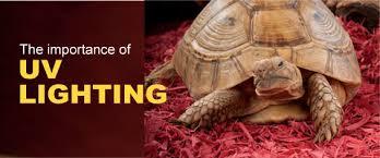 the importance of uv light for turtles u0026 tortoises