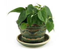Common Tropical House Plants - low light plants 10 forgiving houseplants bob vila