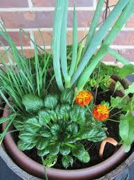 in door plant put in pot vide ten tips for creating beautiful gardens the micro gardener