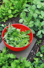 no sun plants 23 and me my favorite edible plants to grow in shade gardenista