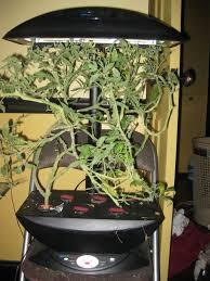 august 2010 indoor gardening my aerogarden and houseplant blog