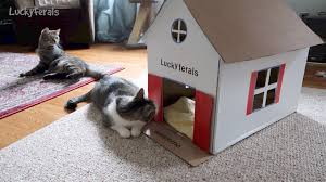 stella u0027s new diy cardboard cat house youtube