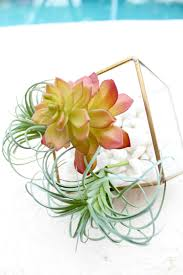 how to create a faux terrarium for spring defined designs