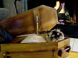 cat caskets coffin furniture coffin cat bed by coffin it up what did the