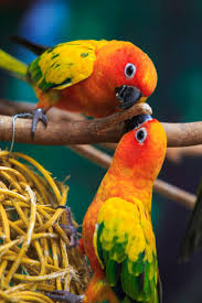 349 best agapornis images on pinterest animals beautiful birds