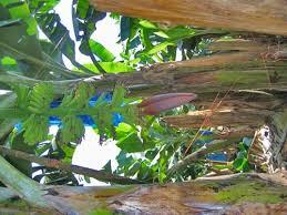 Tropical Plants Pictures - tropical rain forest