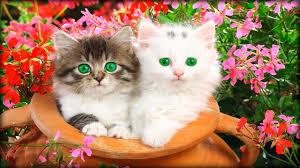 beautiful kittens beautiful wallpapers screensavers http www 4gwallpapers com wp