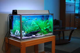 is a 40 litre fish tank a good size aquatics world