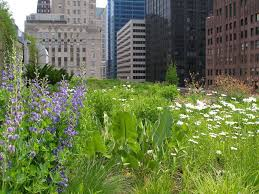 greenroofs com projects chicago city hall