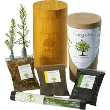 cremation tree from the ashes 3 companies that ll turn cremains into a tree
