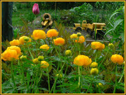 June Flowers - the vermont gardener mid june flowers