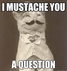 Good Day Sir Meme - good day sir cat google search sashes pinterest