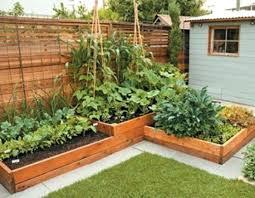 Backyard Vegetable Garden Ideas Vegetable Garden Ideas Paradoxproductions Site