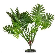imagitarium sago palm terrarium plant petco